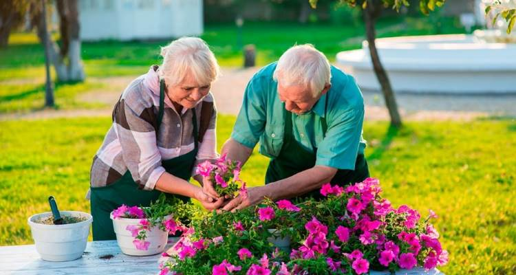 a senior couple gardening